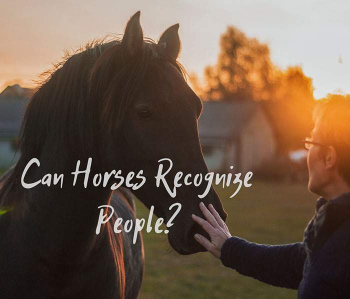 Can Horses Recognize People as Their Keepers?