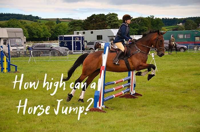 How High Can a Horse Jump?