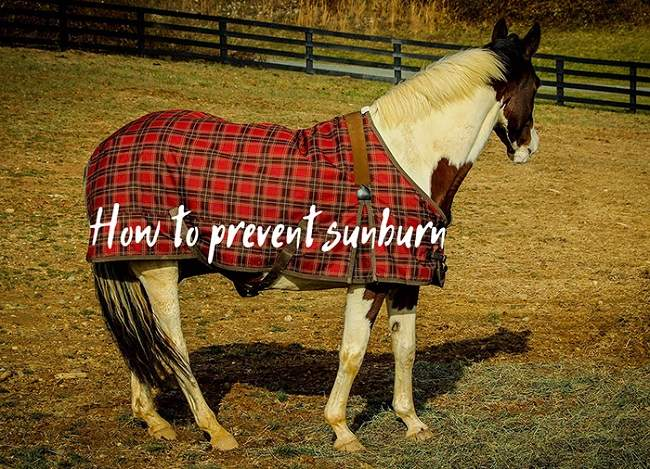 Horses and Sunburn – Everything You Need to Know