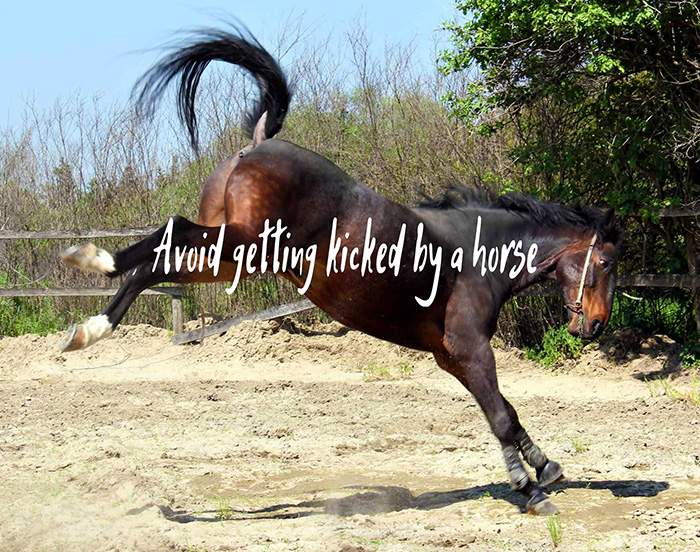 How To Avoid Getting Kicked by A Horse
