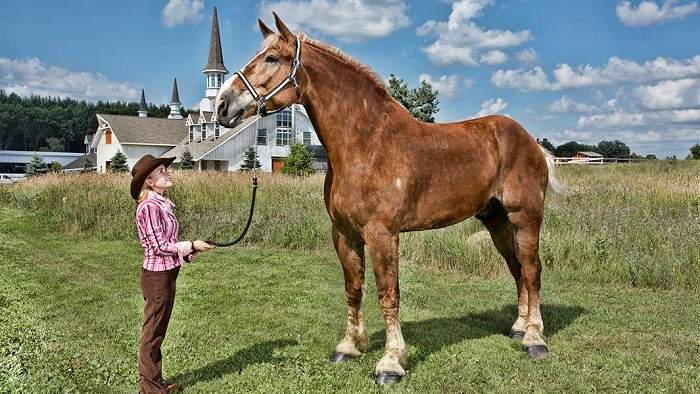 Is Big Jake Still The Tallest Horse in the World?