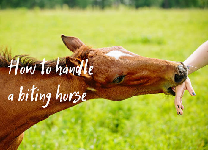 How to Handle a Horse That Bites People