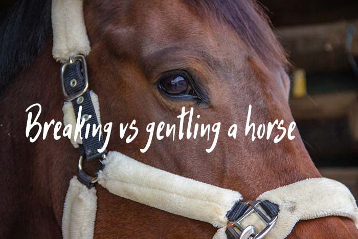 Breaking a Horse vs Gentling It: What's the Difference?