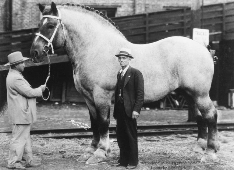 Was Brooklyn Supreme the Largest Horse on the Planet?