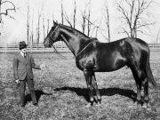 Man o' War Horse