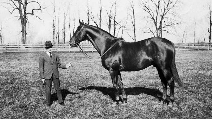These Facts About Man o' War Might Surprise You
