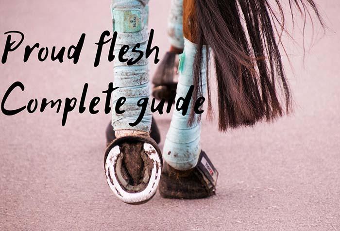 How to Prevent & Treat Proud Flesh In Horses