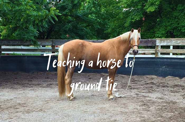 How to Teach Your Horse to Ground Tie