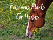 horse poisonous flowers