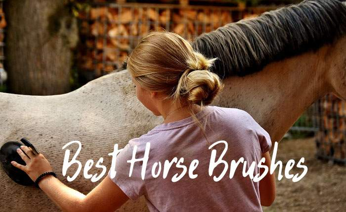 What Are the Best Horse Brushes of 2021?