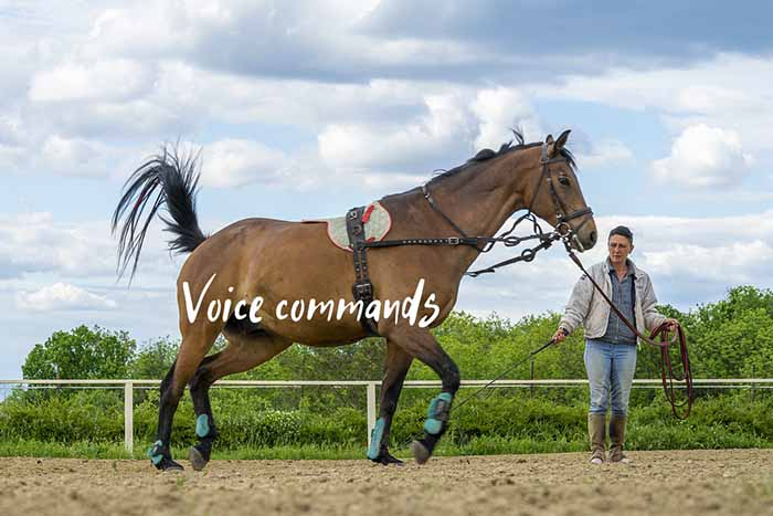 How to Train Your Horse Using Voice Commands and Cues