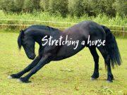 stretch a horse