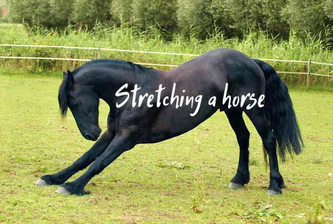 How to Stretch a Horse and Maintain Its Flexibility