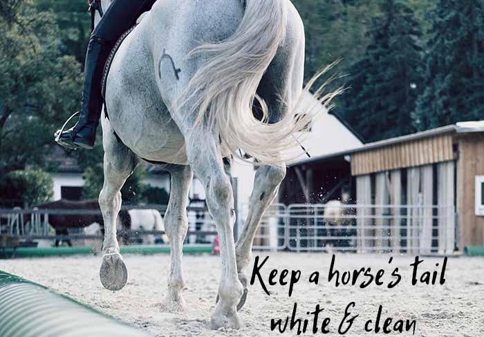 How to Keep Your Horse's Tail White & Clean