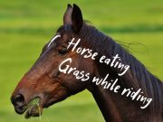 horse eating grass while riding