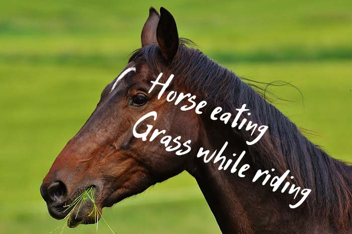 How to Prevent Your Horse From Eating Grass While Riding