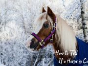 horse is cold
