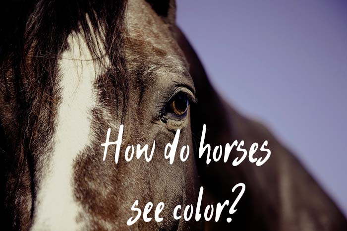 How Do Horses See Color & Do They Have Good Night Vision?