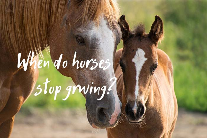 When Do Horses Stop Growing: A Complete Guide