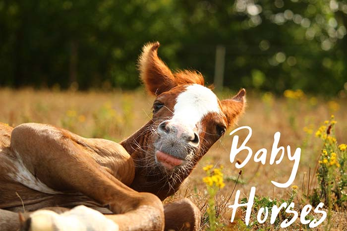 What Is a Baby Horse Called (And Other Interesting Facts)