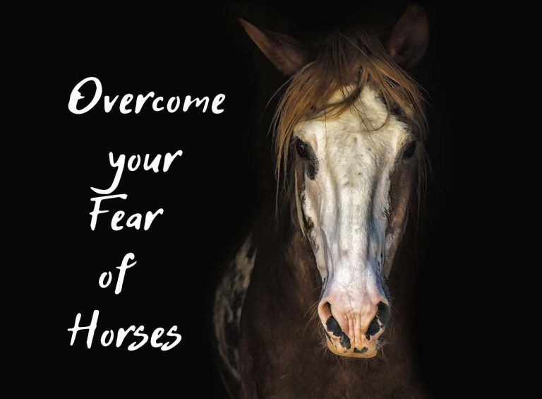 10 Steps to Overcome Your Fear of Horses That Actually Work