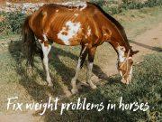 horse not gaining weight
