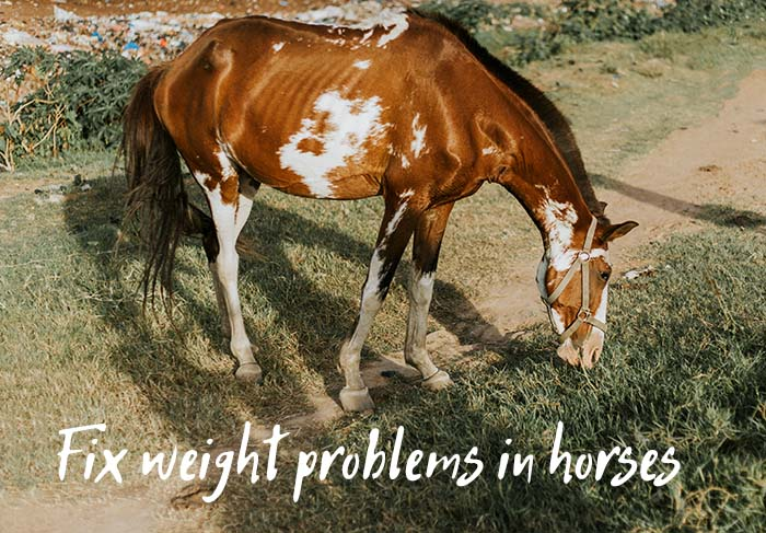 Here's Why Your Horse Is Not Gaining Weight and How to Fix It