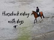 horseback riding with dogs