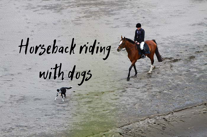 Horseback Riding With Dogs: The Do's and Don'ts