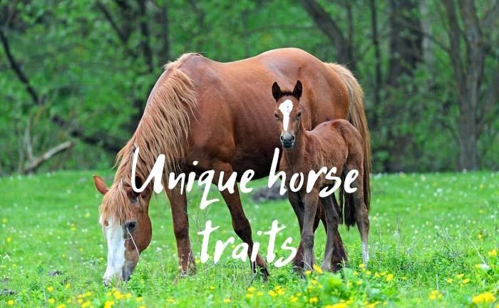 Unique & Interesting Traits Exclusive to Horses