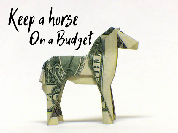 How to Take Care of a Horse on a Budget – My Best Tips