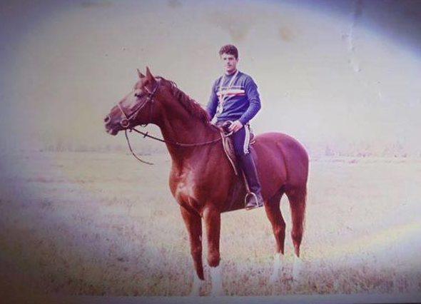 mult-iubit romanian sporthorse
